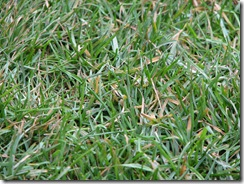 Allianz_Arena_closeup_on_grass