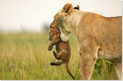 leona y bebe