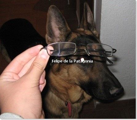 felipillo_2