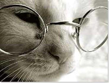 el-gato-con-gafas