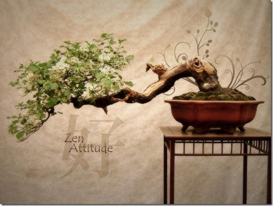 Zen_Attitude-18