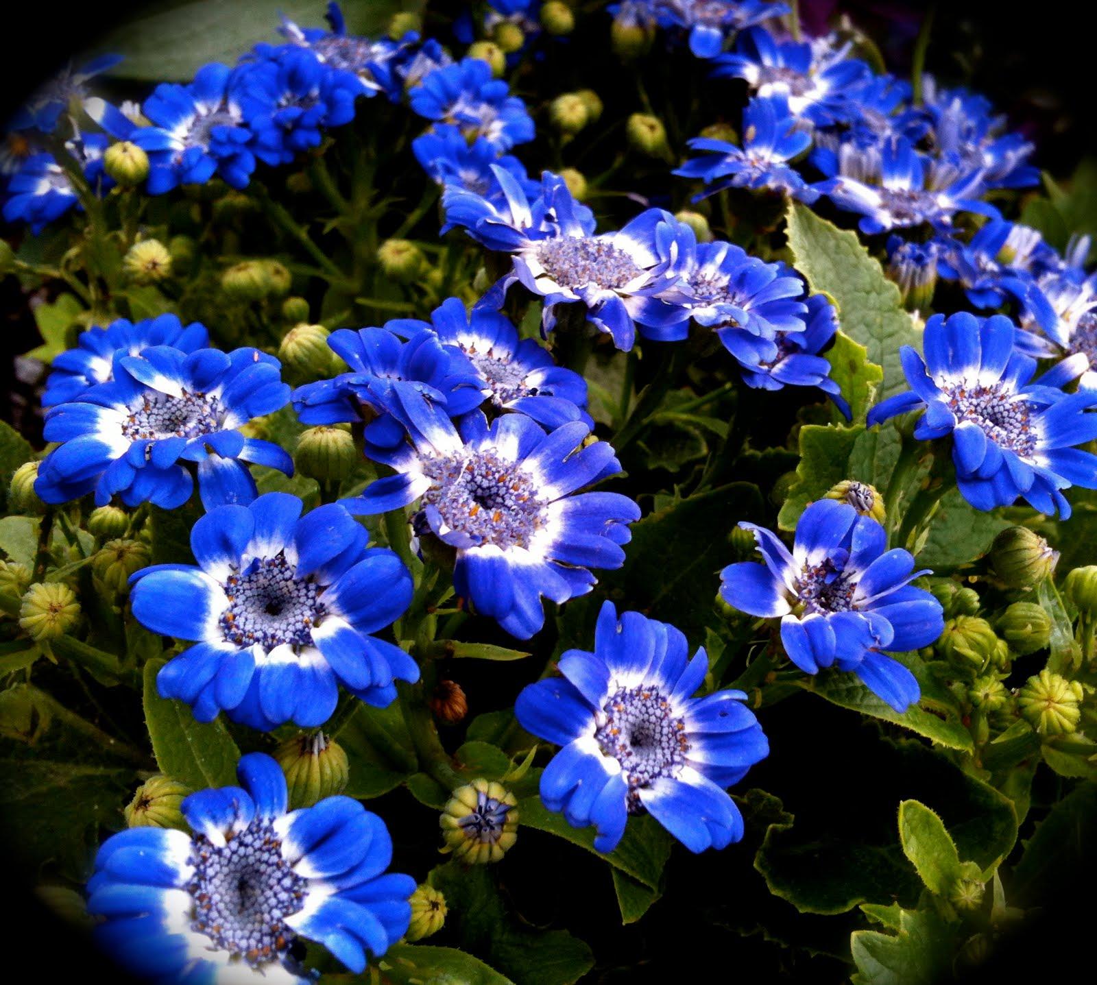 Blue Flowers 3 Seourpicz Bright