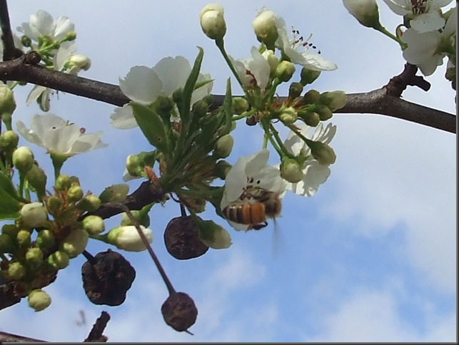 Bees and nature 023
