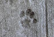 Фотокома - Антон Перезимник: Коты