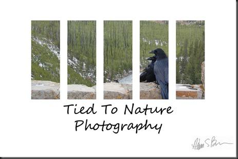 Fine Art Raven