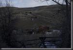 Fence HDR Orig Blog1