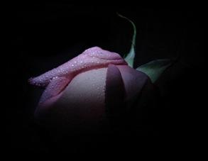 rosa_elena kuts