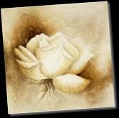 Betty-Jansma-White-rose-I-27452