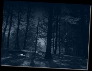 forest at night - wordpress