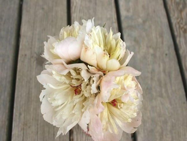 peonies on board