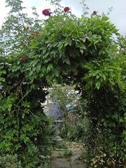 240111_Aunts_Garden