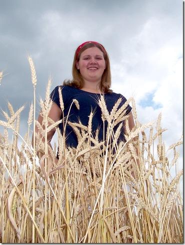 tif wheat