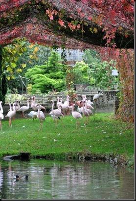Lesser Flamingo autumn enclosure (resized)
