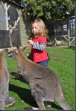 Lily feeding Wallabies