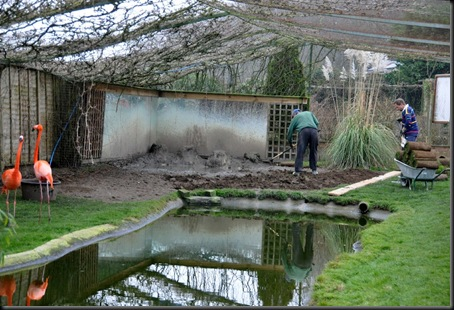 Re-turfing in Caribbean enclosure March 11
