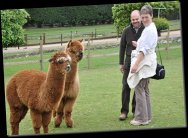 Simon &amp; Rachel with Alpacas DSC_0701