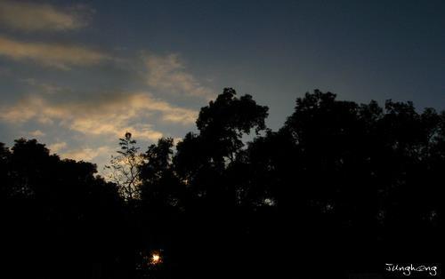 公園裡的落日