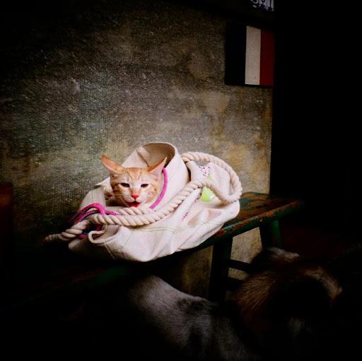 小名的小貓