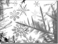 snow-brushes