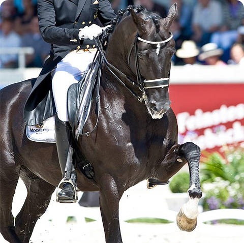 el-caballo-mas-caro-del-mundo