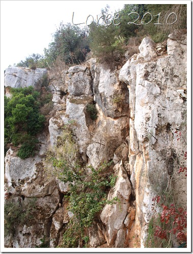 Il-Maqluba (5)
