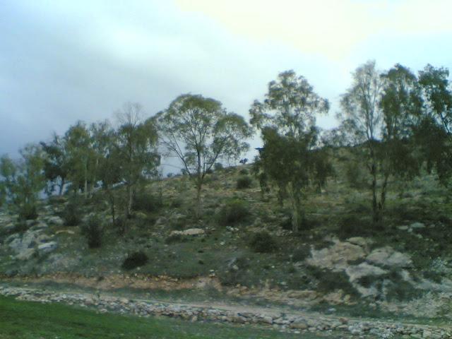 صور من وادي الحداد Sultan%3B%281432%29