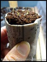 Newspaper Seedling Pot