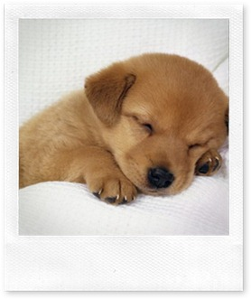 dog_sleeping_5436_1024_768