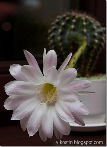 20100501_214200_flowers__mg_0633