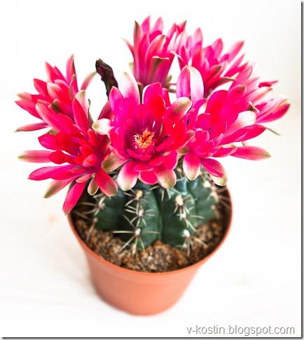20100418_133418_flowers__MG_0127