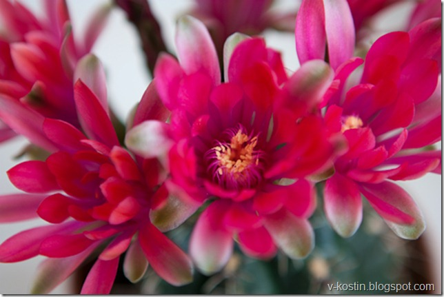 20100418_133817_flowers__MG_0142