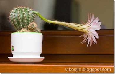 20091007-224357-cactus-_MG_3776