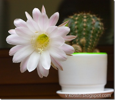 20091007-224731-cactus-_MG_3791