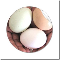 EggsNestedInHandsStickersZazzle