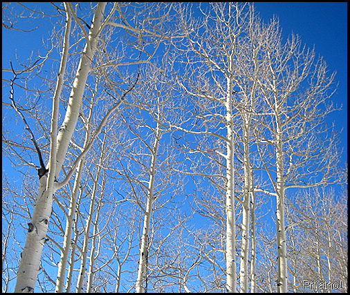 Crested Butte4