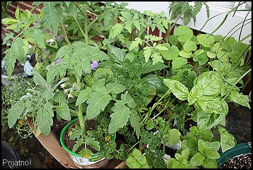 garden, march 09 019