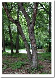 2-6 Native Tree