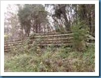 Backwoods1