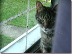 cat in the window