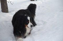 Vem gillar inte att vada i snö?