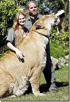 liger02
