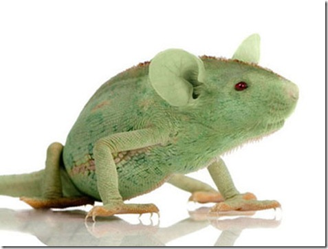 rata camaleon