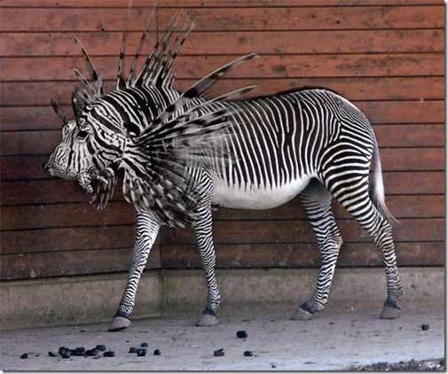 zebra pez leon