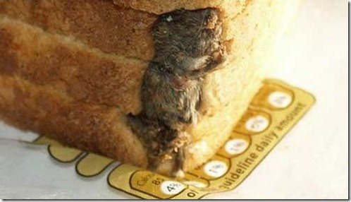 mouse_in_loaf_of_bread_02[4]