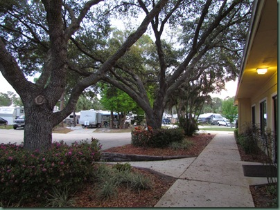 Live Oaks at clubhouse