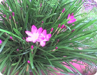 flores15