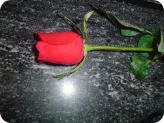 rosa_21