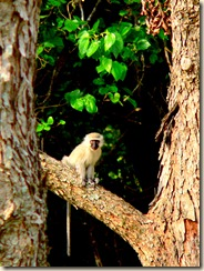 Monkey cropped portrait