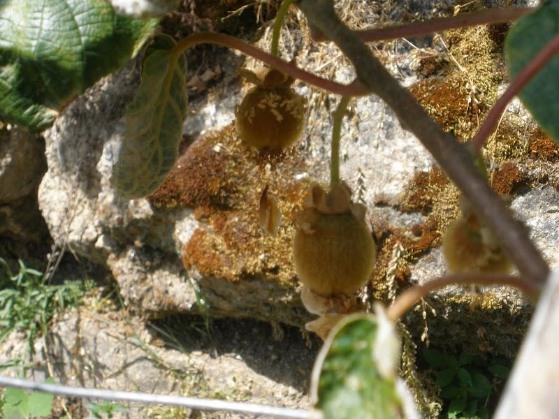 Primavera no Castedo P6110117