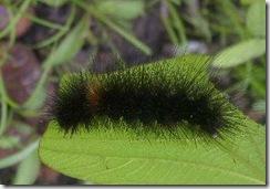 03_Caterpillar